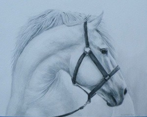 "Amy Bickford ~ ""Horse Study"" ~ Watercolor Pencil 9"" x 11.5"""