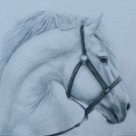"""Amy Bickford ~ 'Horse Study' ~ Watercolor Pencil 9"""" x 11.5"""""""